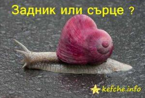 Задник или сърце