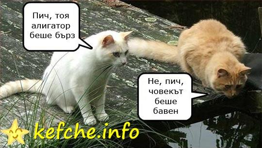 смешни котки